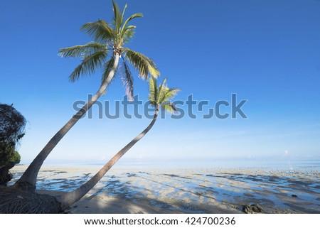 Beautiful view coconut tree grove, palm tree in Tropical Beach  - stock photo