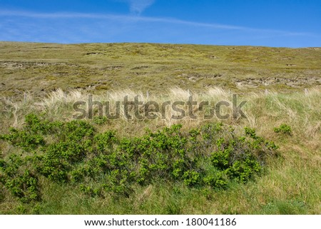 Beautiful view of Dutch dunes at Scheveningen  - stock photo