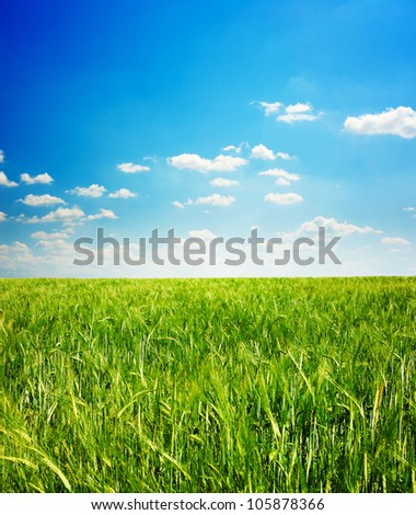 beautiful view of green grass and blue sky