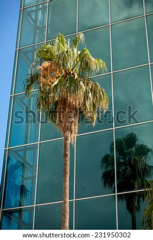 Beautiful view of high palm growing against modern building with big windows - stock photo