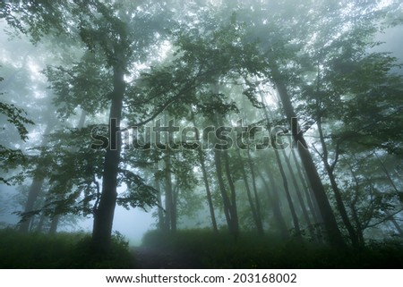 Beautiful view of mysterious foggy forest - stock photo