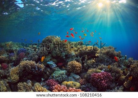 beautiful view of sea life - stock photo