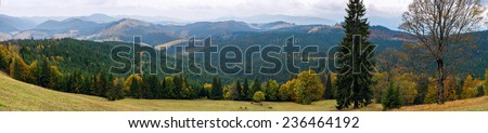 Beautiful view of the forest in the Carpathian Mountains with grazing horses, Ukraine. - stock photo