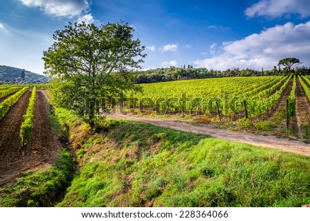 Beautiful view of the vineyards in Tuscany - stock photo