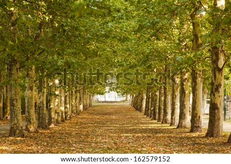 Beautiful view of walkway along lined trees in the park - stock photo