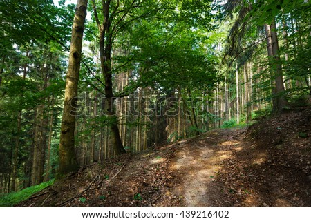 Beautiful view on a forest path and high trunks of trees and green leaves. Moravian landscape.