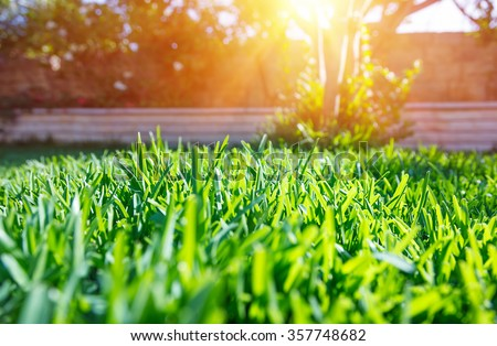 Beautiful view on cute backyard in sunny day, fresh green grass lawn in sunlight, landscaping in the garden, beauty of summer season