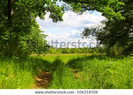 Beautiful view on road in field and forest - stock photo