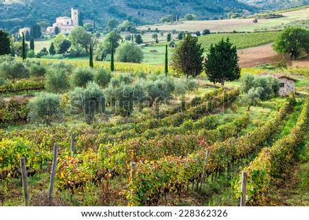 Beautiful view over the vineyards in Tuscany - stock photo