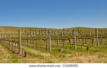 Beautiful Vineyard in Napa Valley in Spring - stock photo