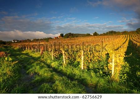 Beautiful Vineyard Landscape with road - stock photo