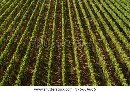 Beautiful Vineyard Rows From AboveTravel And Wine-making Background. - stock photo