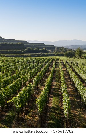 Beautiful Vineyard Terraces With Blue Sky And Sunshine in Ihringen, Kaiserstuhl, Germany.This Region Has The Most Hours Of Sunshine In Germany.Travel And Wine-making Background. - stock photo