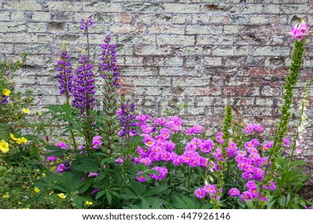 Beautiful, violet flowers blooming in the garden against old brick wall - stock photo