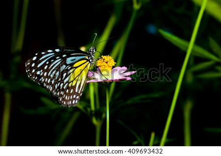 Beautiful vivid color butterfly - stock photo