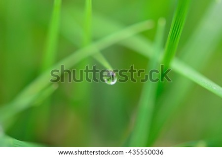 beautiful water droplet on green summer grass in early morning - stock photo
