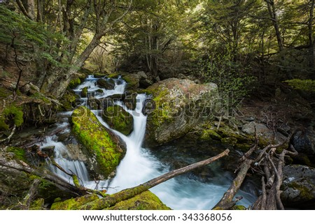 beautiful waterfall in beech forest in New Zealand - stock photo