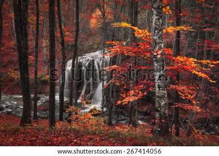 Beautiful waterfall with trees, red leaves, rocks and stones in autumn forest. Silver Stream Waterfall (Autumn forest in Crimea)