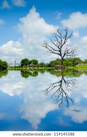 Beautiful wetland view, reflection with tree