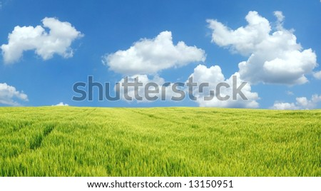 Beautiful wheat field - stock photo