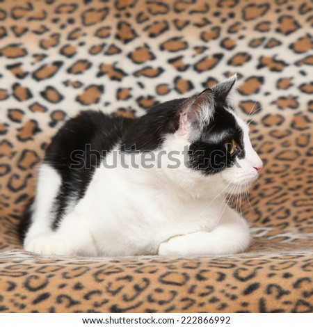 Beautiful white and black cat lying on blanket - stock photo