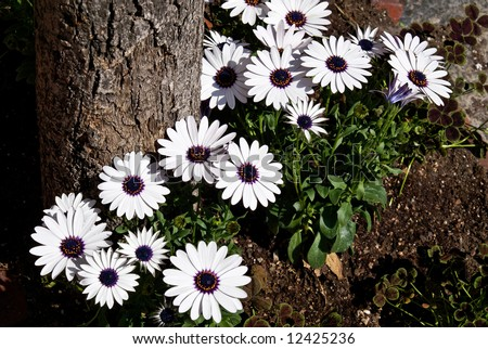 Beautiful white purple flowers base tree stock photo royalty free beautiful white and purple flowers at the base of tree in full sunshine on a spring mightylinksfo