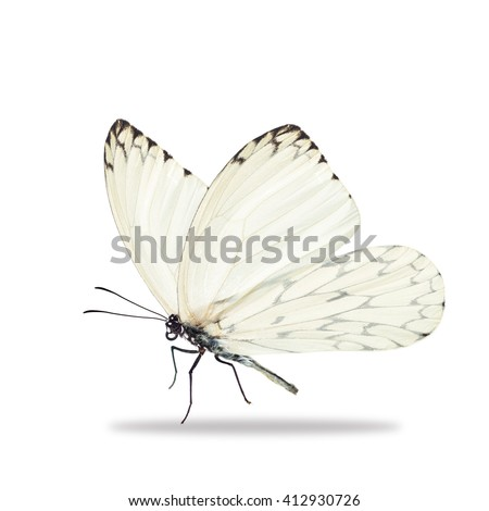 Beautiful white butterfly isolated on white background. - stock photo