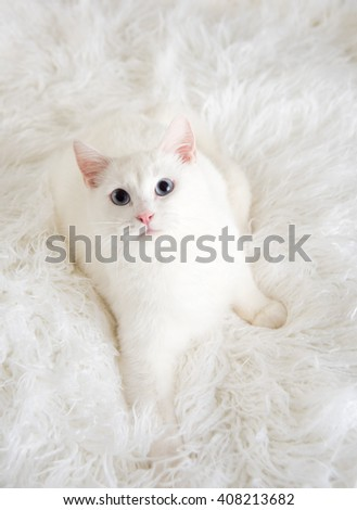 Shaggy Stock Photos Royalty Free Images Amp Vectors