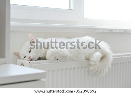 Beautiful white cat relaxing on the radiator closeup - stock photo