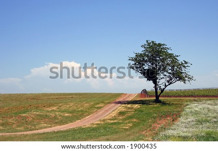 Beautiful white clouds over vineyard and field - stock photo