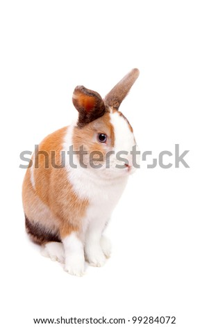 Beautiful  white decorative fluffy Easter Bunny on a white background - stock photo
