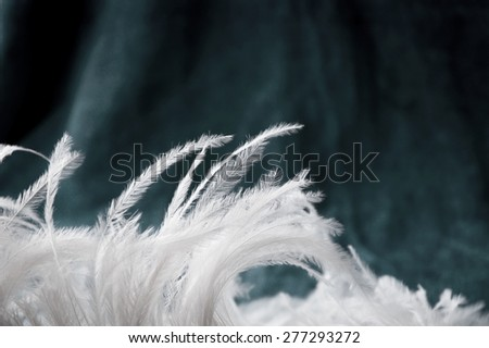 beautiful white feather on turquoise background - stock photo