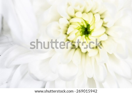 beautiful white flower as a background. close-up