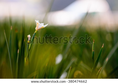 Beautiful white flower on green background