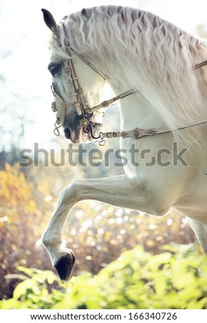 Beautiful white horse - stock photo