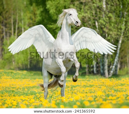 Beautiful white horse with wings rearing up on the field with dandelions - stock photo