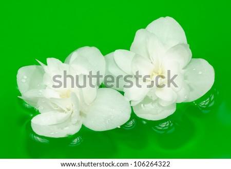 Beautiful White Jasmine Flowers on Water - stock photo