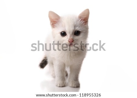 beautiful white kitten on a white background - stock photo