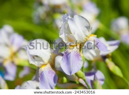Beautiful white nature flower - stock photo