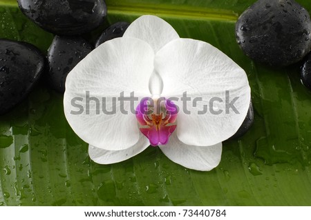 Beautiful white orchid and black stones on banana leaf background