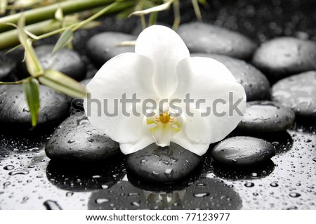 Beautiful white orchid and stones with green leaves