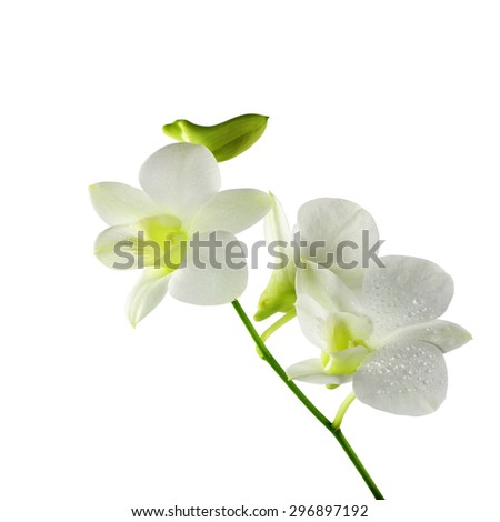 Beautiful white orchid flowers isolated on a white background,clipping path - stock photo