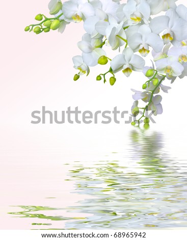 Beautiful white orchid flowers reflected in water - stock photo