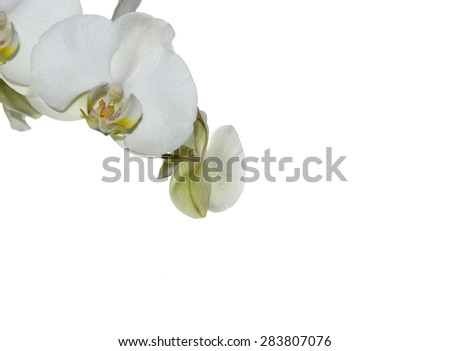 Beautiful white orchid isolated on a white  background
