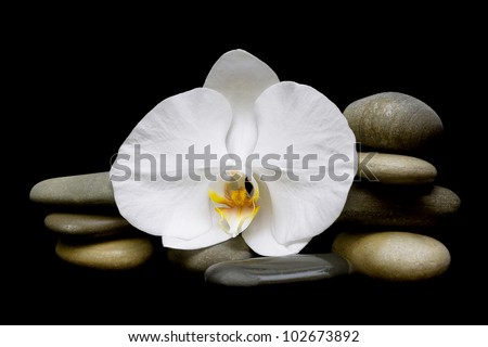 Beautiful white orchids and sea stones on a black background