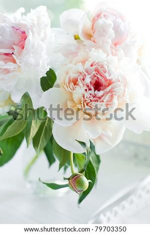 Beautiful white peony flowers - stock photo