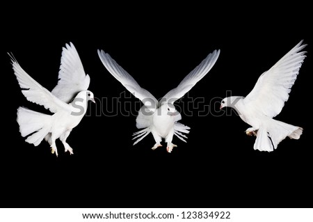 Beautiful white pigeon and female hand close up - stock photo