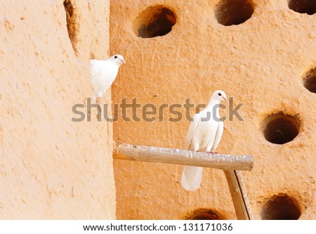 Beautiful white pigeons in a Dovecote at Katara village, Qatar - stock photo