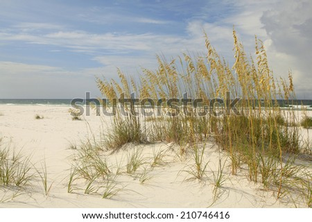 Beautiful White Sand Beach with Sea Oats