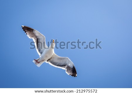 Beautiful White Seagull Flying in Blue Sky - stock photo